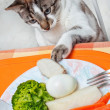 Stock Photo: Curious cat at table.