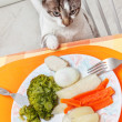 Stock Photo: Cat at table with food.