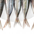 Tails of raw mackerel on a plate. — Stock Photo