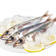 Stock Photo: Three raw mackerel in ice and lemon. On white background.