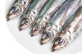 The heads of raw mackerel on a plate. On a white background. — Stock Photo