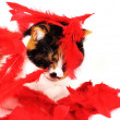 A red feathered cat — Stock Photo