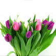 A bouquet tulips — Stock Photo