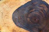 Walnut Tree — Stock Photo