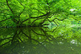 Green reflection — Stock Photo