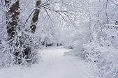 Winter background with trees in the snow and the road — Stock Photo