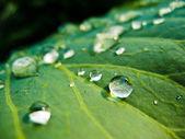 Gocce d'acqua sulla foglia verde fresca — Foto Stock