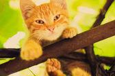 Gatito joven sentada en la rama — Foto de Stock