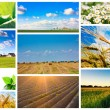 Stock Photo: Harvest concepts. Cereal collage