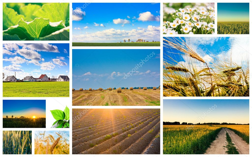 Agricultural set. Agriculture or harvest collage — Stock Photo #9263811