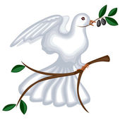 The dove with olive branch — Stock Vector
