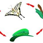 Butterfly life cycle. Metamorphosis — Stock Vector