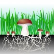 Постер, плакат: Mushrooms and vegetation Reproduction fungus Mycelium and spore