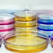 Petri dishes with colored fluids — Stock Photo #10536198