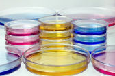 Petri dishes with colored fluids — Stock Photo