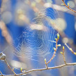 Stock Photo: Spring. The awakening of nature, the first web.