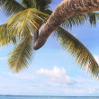 Stock Photo: Coconut tree at beach