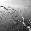 Lake with dead wood in the mist — Stock Photo