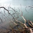 Photo: Lake with dead wood in the mist