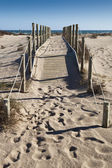 Path to the sea — Stock Photo