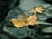 Leaves on water — Stock Photo