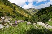 Mountain valley — Stock Photo