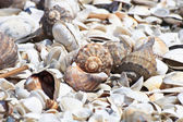 Shells on the beach — Stock Photo