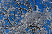 A tree filled with snow — Stock Photo