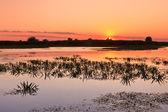 Sunrise in the Danube Delta — Stock Photo