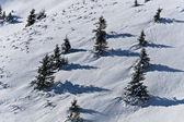 Kış, ağaçlar — Stok fotoğraf