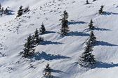 Träden på vintern — Stockfoto