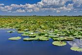 Delta del danubio, rumanía — Foto de Stock