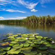 Stock Photo: Danube Delta, Romania