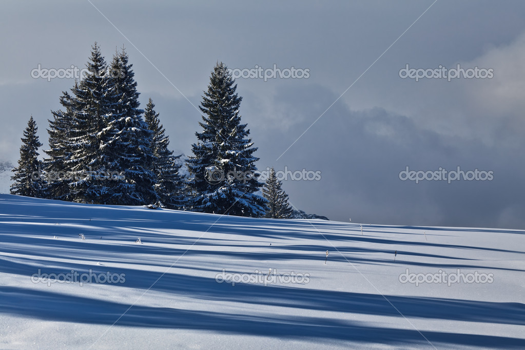 A pine forest in the middle of winter — Stock Photo #8730784