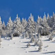 Forest with pines in winter — Stock Photo #8741857