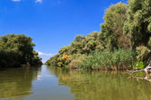 River channel in the Danube Delta — Stock Photo