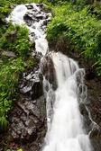 A mountain stream — Stock Photo