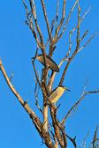 黒戴冠させた夜 heron — ストック写真