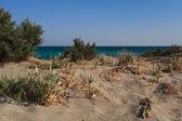 野生海滩 — 图库照片