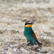 Europebee eater — Stock Photo #9267640