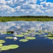 Danube Delta, Romania — Stock Photo #9267653