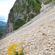 Plant on a mountain slope — Stock Photo