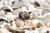 Shells on the beach — Stock Photo