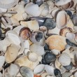 Lot of shells — Stock Photo #9603469