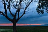 Arbre au coucher du soleil — Photo