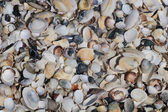A lot of shells — Stock Photo