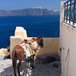 Stock Photo: Donkey in Santorini, Greece