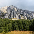 Pine forest near a mountain — Stock Photo