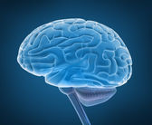Human brain 3D model — Stock Photo