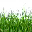 Stock Photo: Grass on white background horizontal